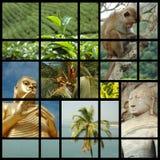 Sri- Lankacollage mit Fotos der Grenzsteine Lizenzfreies Stockfoto