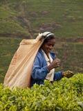 Sri- Lankafrau Stockbild