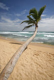 Sri Lankan beach Royalty Free Stock Images