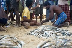Sri Lankan fishermans Stock Image