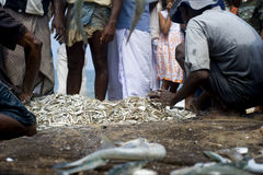 Sri Lankan fishermans Royalty Free Stock Photo