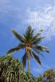 Sri lankan kokospalm en tropische installaties Stock Foto
