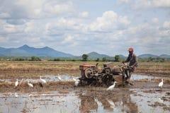 Sri Lankan man work on rice field Stock Photography