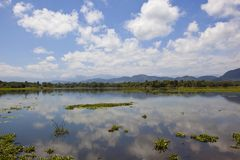 Sri lankan mirror lake with lotus Royalty Free Stock Photo