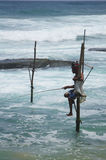 Sri Lankan Standing fishing Royalty Free Stock Image