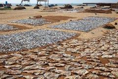 Sri Lankan traditional method of drying fresh fish Stock Image