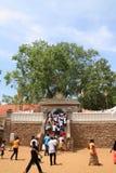 Sri Maha Bodhi в Anuradhapura Стоковая Фотография RF