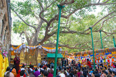 Sri Maha Bodhi Tree Anuradhapura, Σρι Λάνκα Στοκ Φωτογραφία