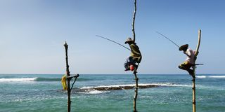 Srilankan fisherman sitting on stick of wood. Srilankan fisherman fishing sitting on stick of wood stock image