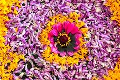 Srilankesisk kultur av traditionell blommakonst royaltyfria foton