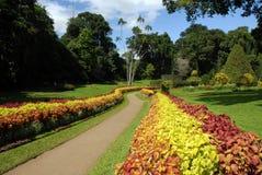 Srilankesiska botaniska trädgårdar fotografering för bildbyråer