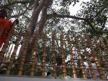 Srimaha bodhiya - anuradhapura - sri lanka stock image
