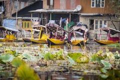SRINAGAR, LA INDIA - 17 DE OCTUBRE DE 2013: Forma de vida en el lago Dal, lugares geométricos Imagen de archivo