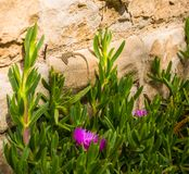 Sringtime花和蜥蜴 免版税图库摄影