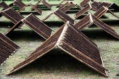Srintiltabak van het drogen van Temanggung Indonesi? in de zon royalty-vrije stock fotografie