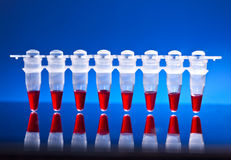 Sripe of plastic tubes for DNA analysis Stock Images
