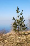 sörja den små treen Royaltyfria Bilder