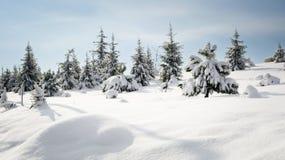Sörja trädet i vintersnö Arkivbilder