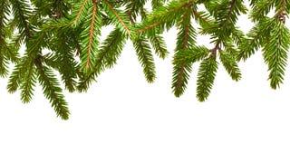 Sörja trädfilialen Royaltyfri Foto