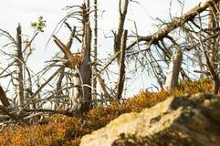 Srogi klimat w górach, łamający, susi drzewa, obrazy royalty free
