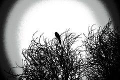 Sroki obsiadanie na górze drzewa Fotografia Stock