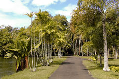 SRR Botanical garden (Pamplemousses, Mauritius). Walkway near to the lake in the park of the SRR Botanical Garden in Mauritius Stock Photo