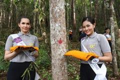 Srta. Tourism Queen Thailand 2017 del viaje de la excursión que acampa Imagen de archivo