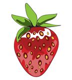 Srtawberry. One simple strawberry fruit color vector illustration Royalty Free Stock Photos