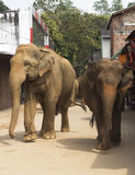 srtreet слонов Стоковые Фотографии RF
