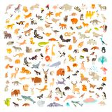 Ssaki ?wiat Zwierzę kreskówki styl, ssak ikona ilustracji
