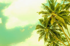 Ssandy beach with coconut palm Royalty Free Stock Photography