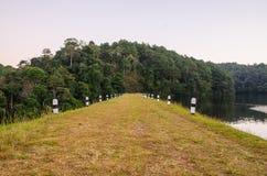 Ssanie w żołądku, Sosnowy las Zdjęcia Stock