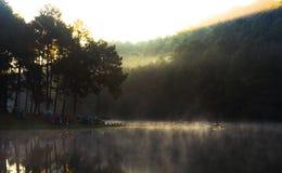Ssanie w żołądku Ung, Jeziorny sosnowy lasu park Obrazy Royalty Free