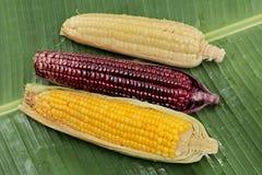 sserved的五颜六色放出的甜玉米准备好 顶视图 免版税库存图片