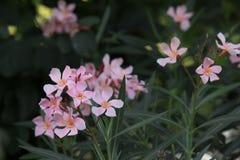 Ssmall grass flower. Royalty Free Stock Image
