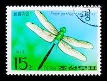 Ssp del partherope di Lesser Emperor Anax Julius, serie delle farfalle, circa 1977 Fotografie Stock