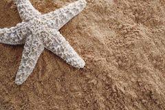 sstarfish песка Стоковая Фотография RF