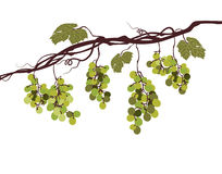 Sstylized graphic image of a vine with pink grapes Stock Photo