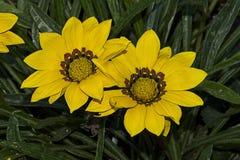 Ssummer blommor Arkivfoto