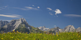 Ssummer meadow Stock Photography