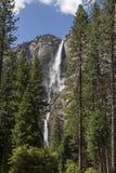 Stå högt Yosemite Falls - Kalifornien royaltyfri foto