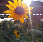 Städtische Blume Stockbilder