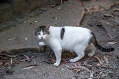 Städtische Katze Lizenzfreie Stockbilder