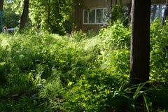 Städtische Landschaft des Sommers Grün des städtischen Hofes mit anspruchslosen Anlagen als Beispiel für die Guerillagartenarbeit Stockfotografie