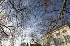 Städtische Landschaft mit Zweigen auf einem blauen Himmel Lizenzfreie Stockfotos