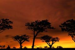 Städtische Wälder Lizenzfreies Stockfoto