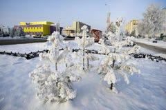 Städtische Winterlandschaft mit Kiefern und bunten Häusern Lizenzfreie Stockfotos