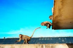 Städtischer Affe Stockfotos