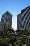 Städtischer Baum Lizenzfreies Stockfoto