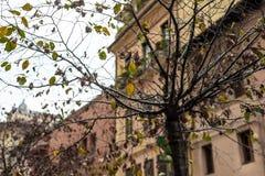 Städtischer Baum in der Stadt ohne Blätter lizenzfreie stockfotografie